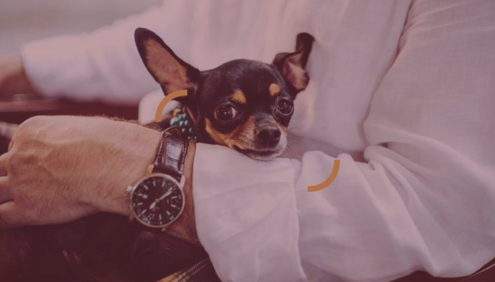 Pet-friendly Coworking Spaces (Pros, Cons & Concerns)
